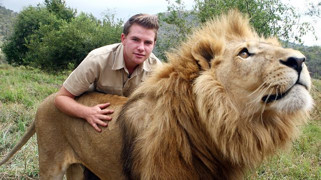 Training To Be A Lion Tamer